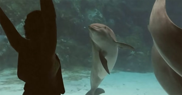 Dolphin Spots Woman Dancing in Front of Aquarium. Its Amazing Reaction Quickly Goes Viral